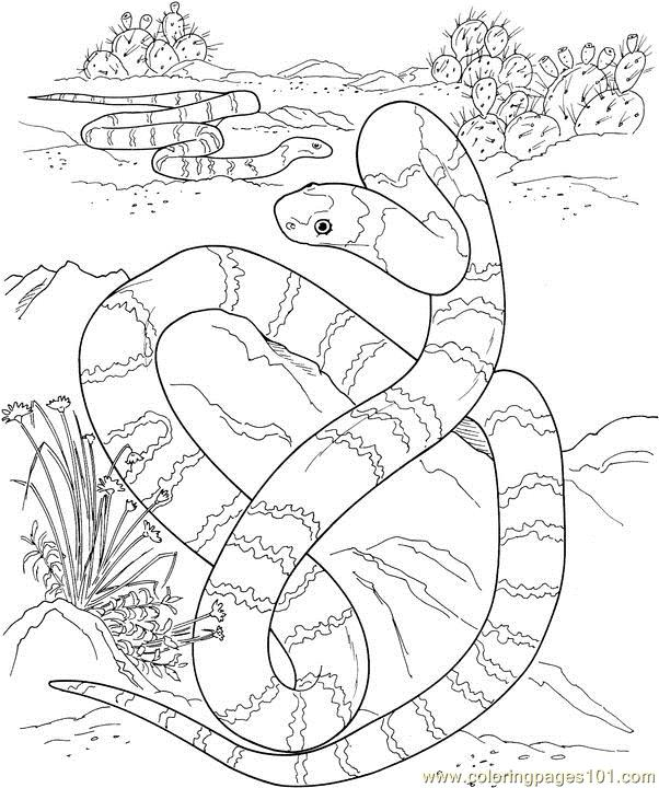 Big long snake in a desert Coloring Page