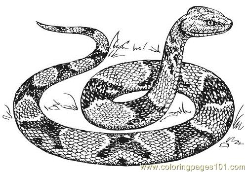 Copperhead Snake Coloring Page Free Snake Coloring Pages Coloringpages101 Com