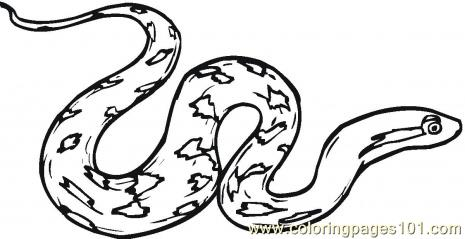 Rattle snake Coloring Page
