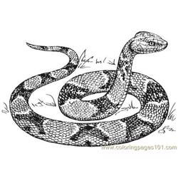 Copperhead snake Free Coloring Page for Kids