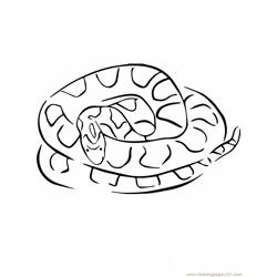 Corn snake coloring page