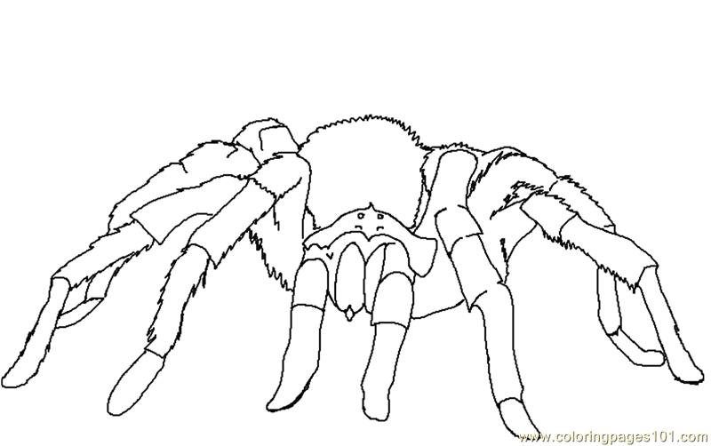 Spider new 40 Coloring Page