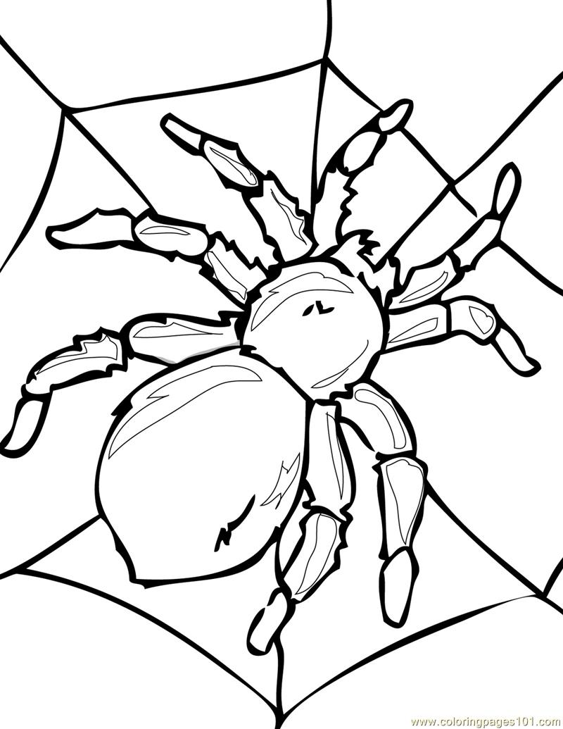 Spider new 41 Coloring Page