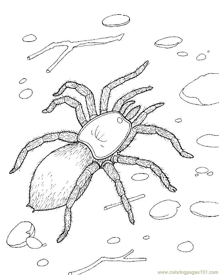 Spider new 51 Coloring Page