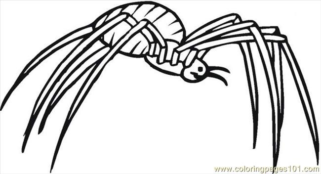 Spider 17 Coloring Page