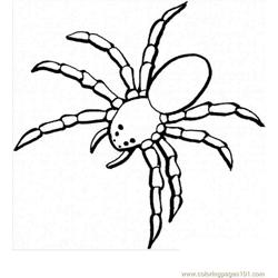 Spider new 33 coloring page