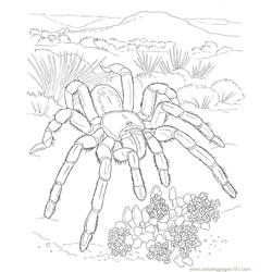 Spider new 35 coloring page