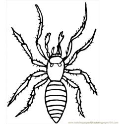 Spider new 39 coloring page