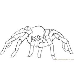 Spider new 40 Free Coloring Page for Kids