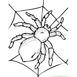 Spider new 41 Free Coloring Page for Kids