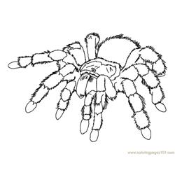 Spider new 42 coloring page
