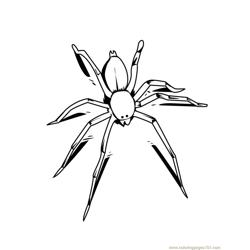 Spider new 43 coloring page