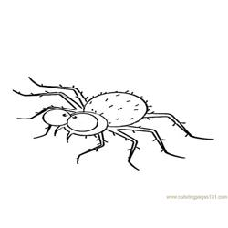 Spider new 44 Free Coloring Page for Kids
