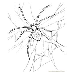 Spider new 52 coloring page