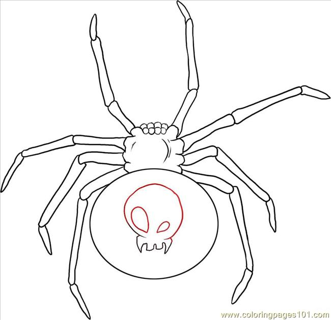 W A Black Widow Spider Step 4 Coloring Page Free Spider