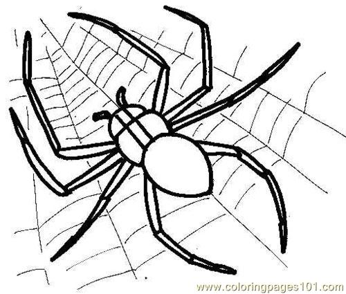 Spider Picture Coloring Page