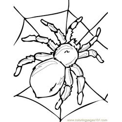 Spider Picture (1) Free Coloring Page for Kids