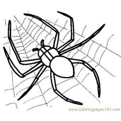 Spider Picture Free Coloring Page for Kids