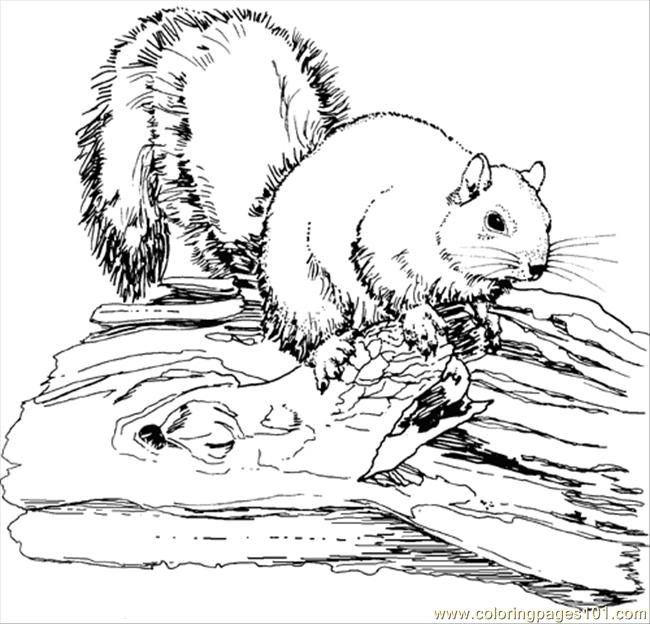 Elegant Squirrel Animal Coloring Pages Coloring Page