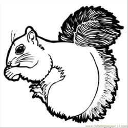 Crsquirrel
