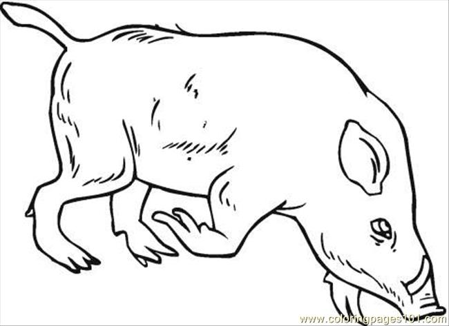 wild boar coloring page coloring page  free the wild