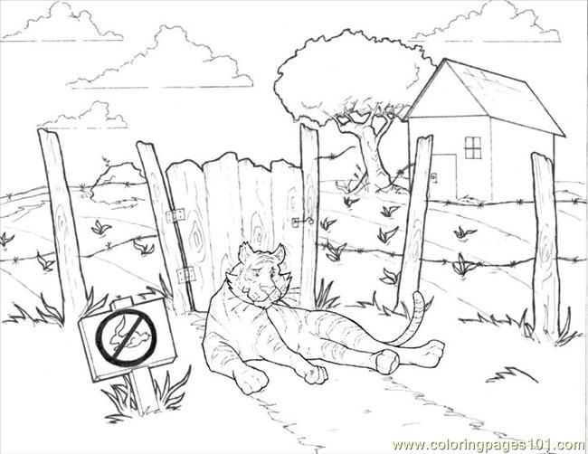 52 Tiger Coloring Page 3 Coloring Page