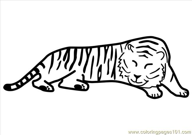 57  Photo Tiger Sleeping Dl10489 Coloring Page