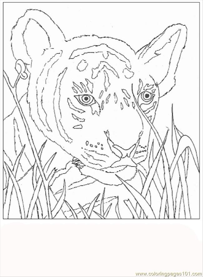 71 Tiger Coloring Page