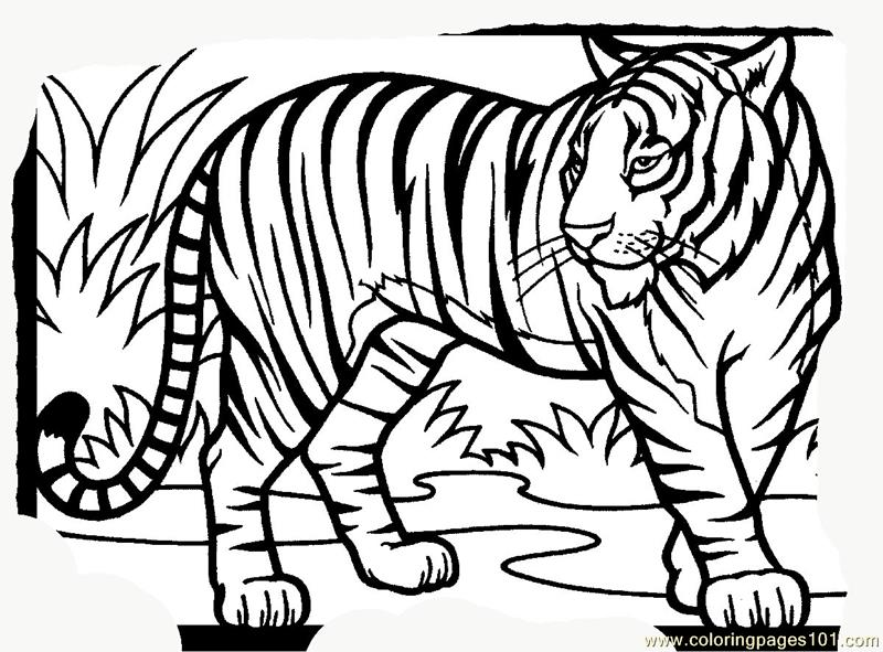 tiger new 15 coloring page free tiger coloring pages