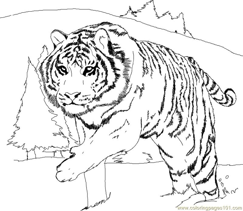 Tiger new 56 Coloring Page