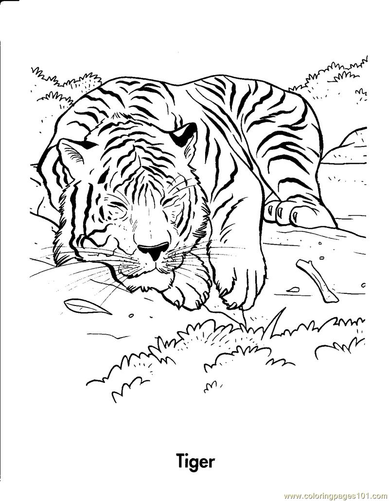 Tiger is sleeping coloring page free tiger coloring for Coloring pages of tiger