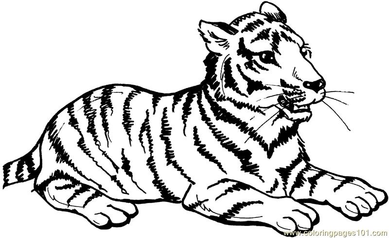 Tiger new 54 Coloring Page