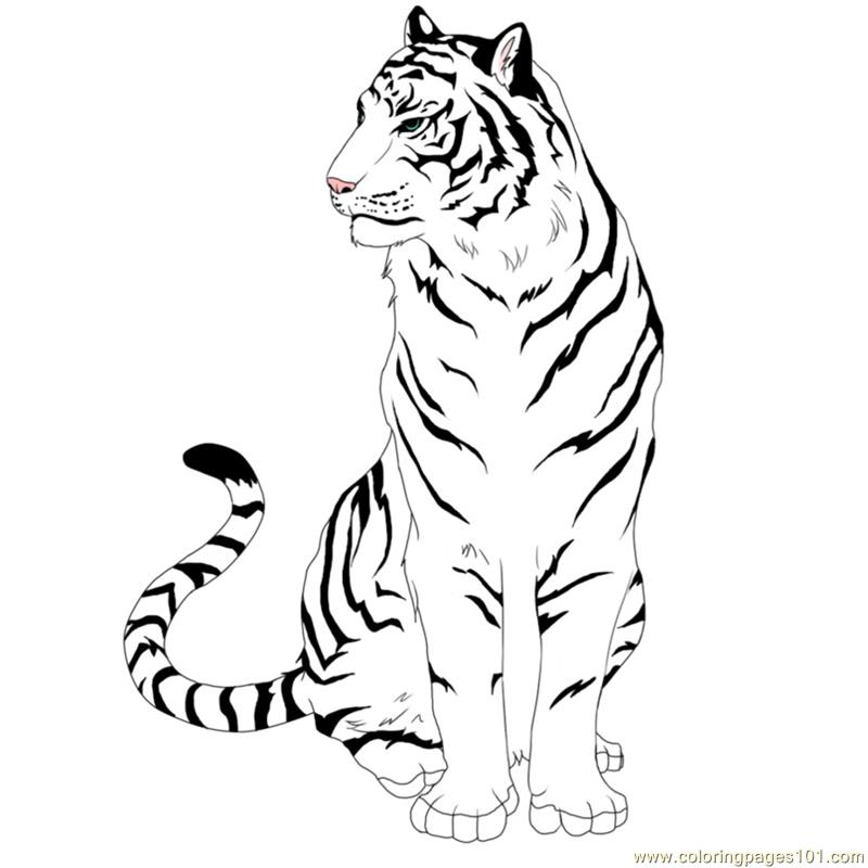 Tiger New 50 Coloring Page Free Tiger Coloring Pages