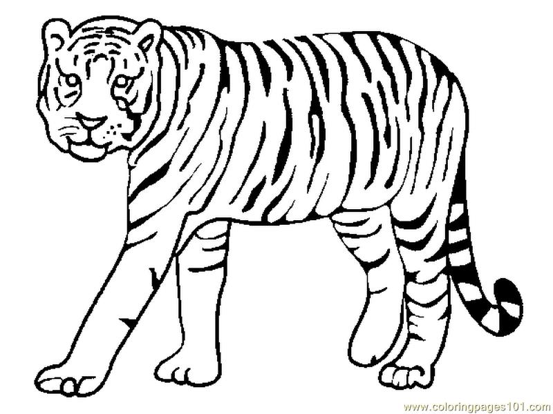 Tiger Coloring Page Free Tiger Coloring Pages ColoringPages101com
