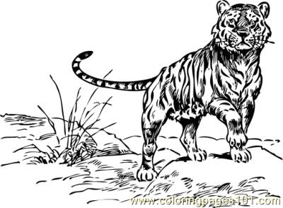 tiger coloring page for kids  free tiger printable
