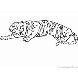 Tiger new 4 Free Coloring Page for Kids
