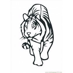 41 Tiger Coloring Pages Free Lrg