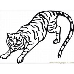 42 Tiger Coloring Pages 11 Lrg