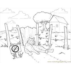 52 Tiger Coloring Page 3