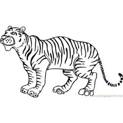 Tiger new 46 Free Coloring Page for Kids