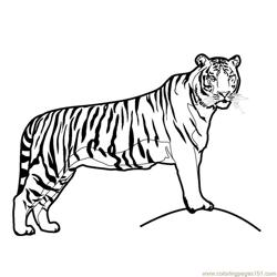 Tiger new 47 Free Coloring Page for Kids