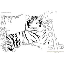 Tiger new 48 coloring page