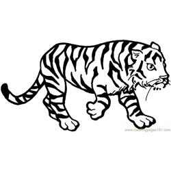 Tiger new 43 Free Coloring Page for Kids