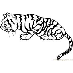 Tiger new 40 coloring page