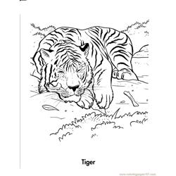 Tiger is sleeping Free Coloring Page for Kids