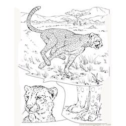 Tiger new 39 coloring page
