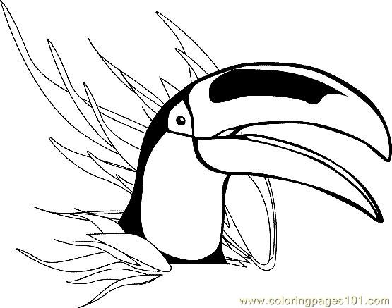 Toucan Coloring Page Free Toucan Coloring Pages