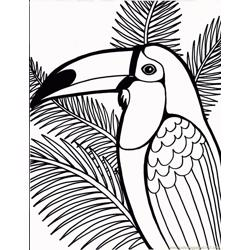 Toucan Free Coloring Page for Kids