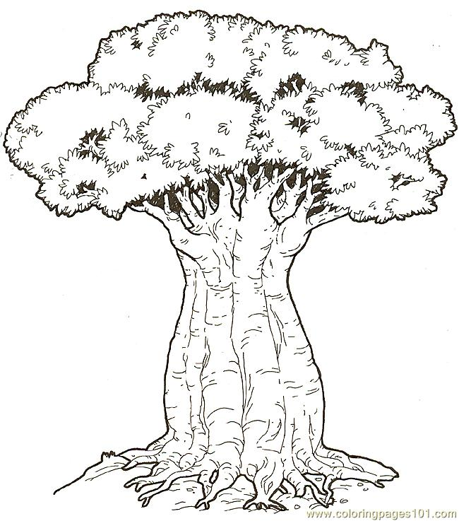 Baobob Tree Coloring Page