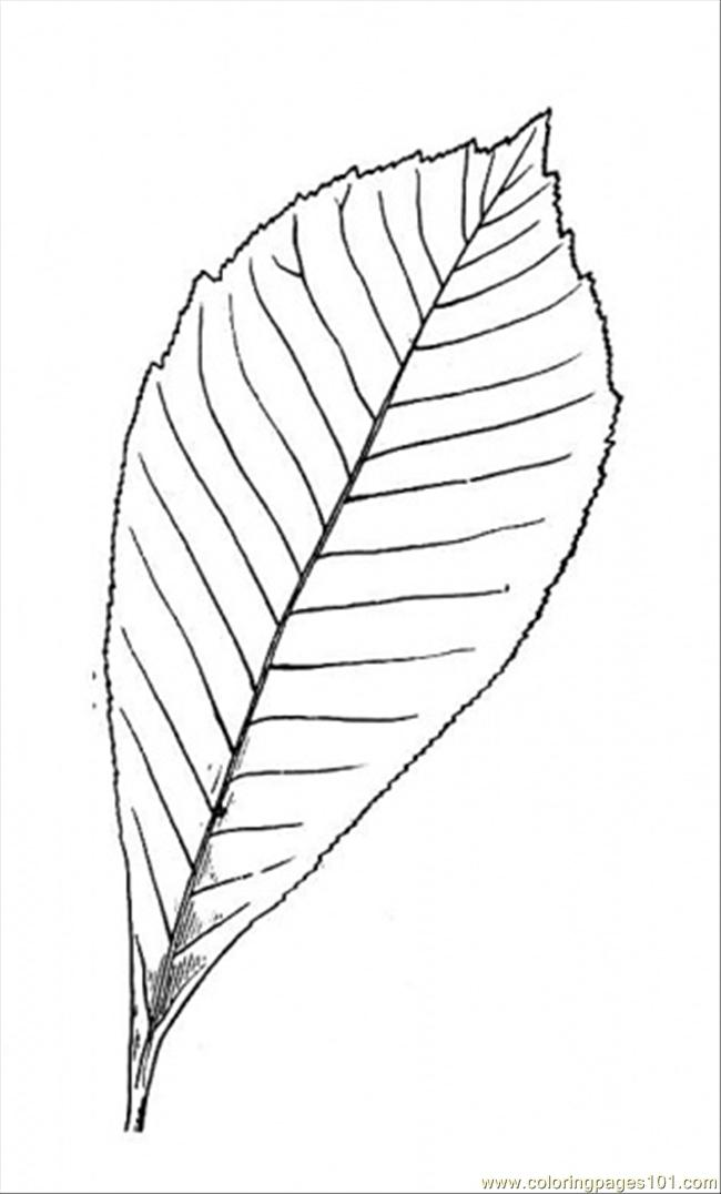Chestnut Tree 2 Coloring Page
